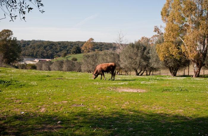fattoria di chiara e arianna