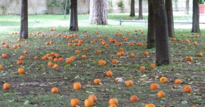 OrangeGarden