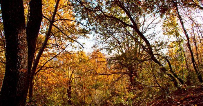 bosco didattico