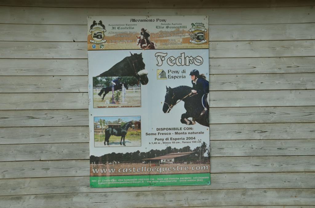 allevamento_pony