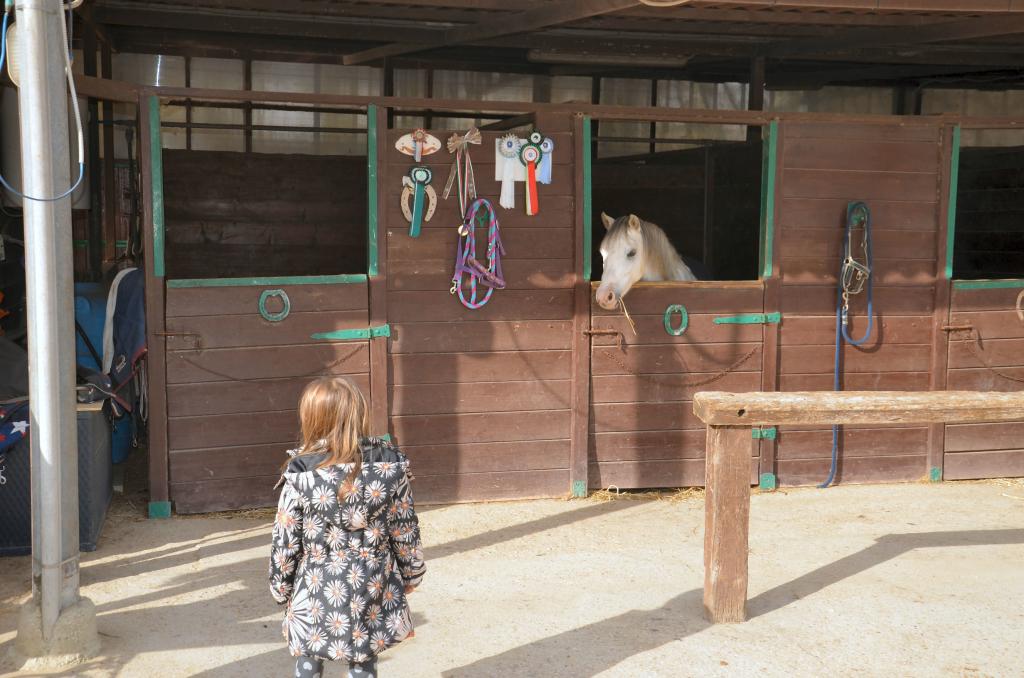 cavalli1