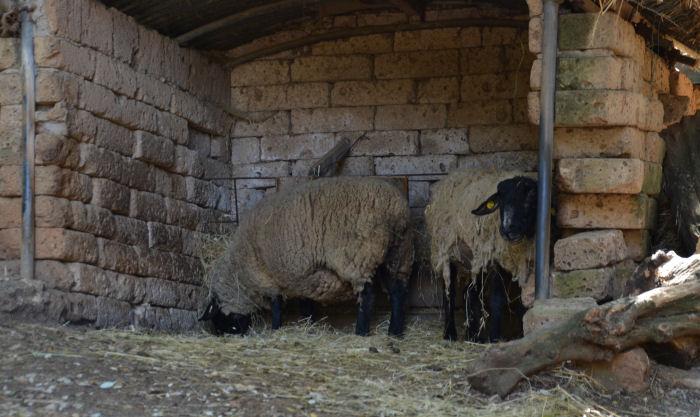 città_della_domenica_shaun_the_sheep