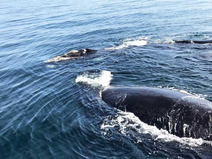 Safari con i bambini balene