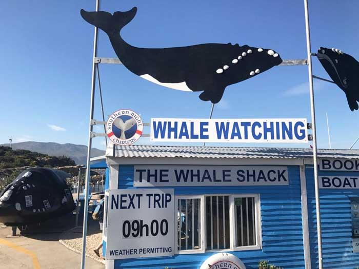 Le balene in Sudafrica con i bambini