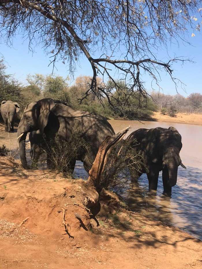 Safari con i bambini elefanti
