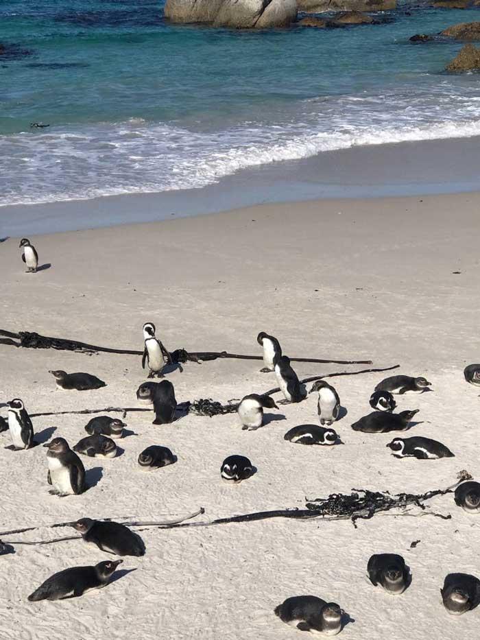 Pinguini in Africa con i bambini