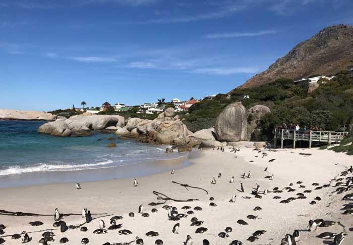 In Sudafrica a vedere i pinguini