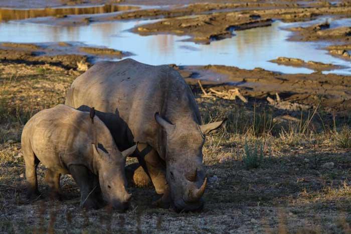 Safari con i bambini animali