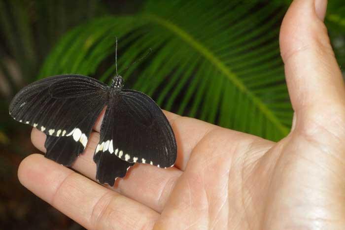 casa delle farfalle roma