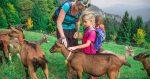 alpe-cimbra-con-bambini