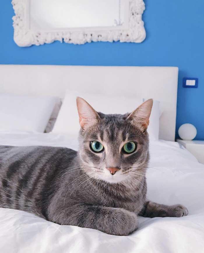 bambini-e-gatti-benefici