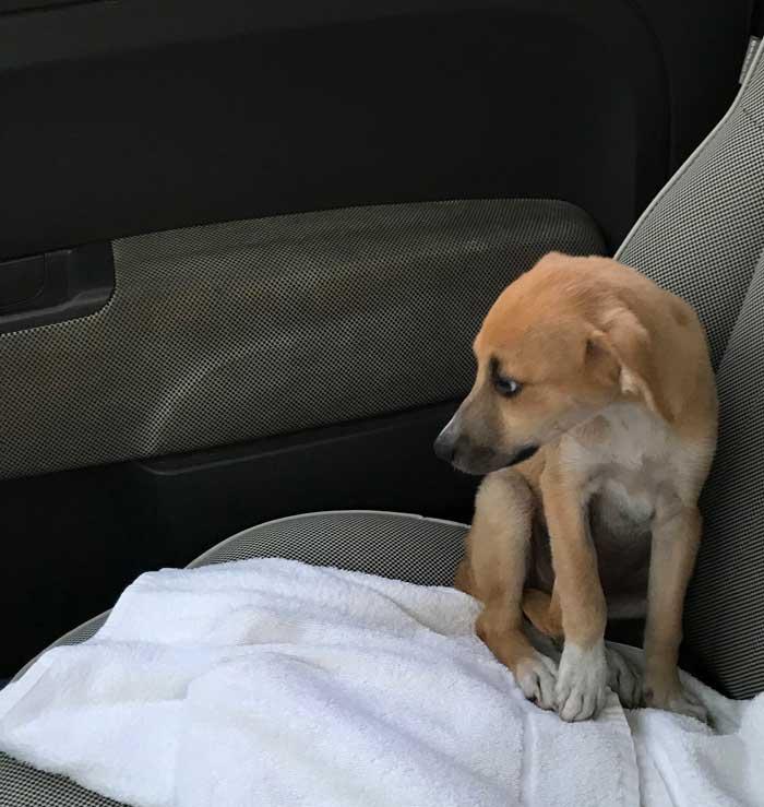 abbandono cani adozione comprare