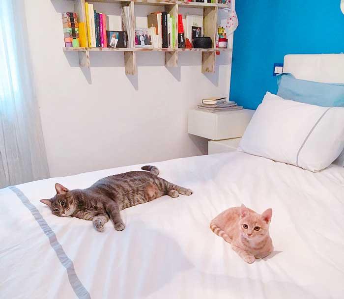 nuovo-gatto-in-casa-come-fare