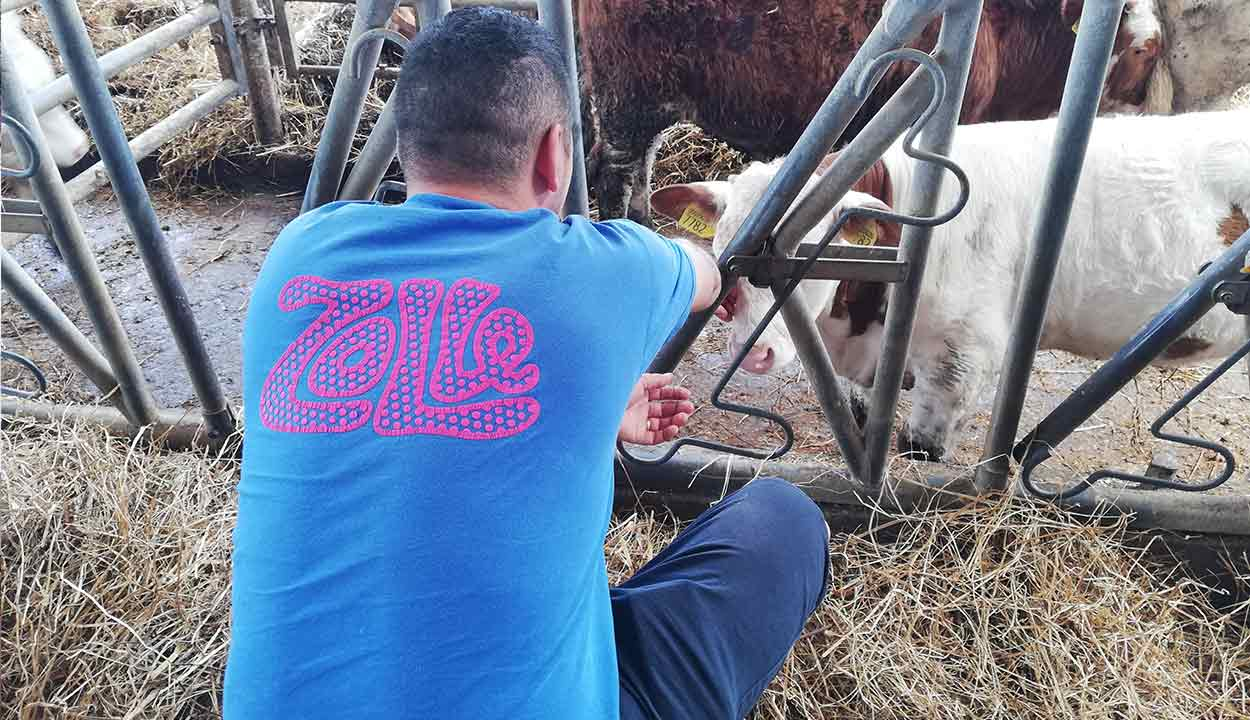 cibo biologico sano a domicilio roma